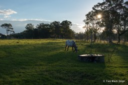 horse in a paddock