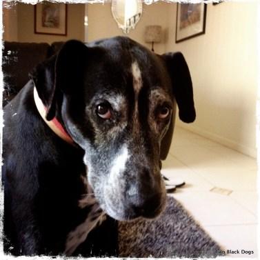 Maxi the dog