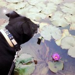 Bundy and waterlily