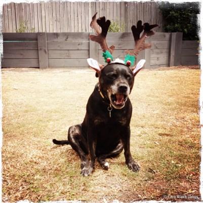 Bundy bored with Christmas already