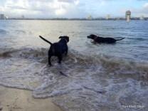 Bundy and Maxi the dogs enjoying a swim