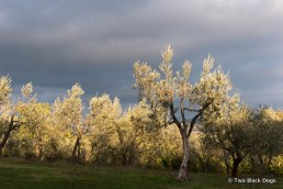 Visiting a vineyard in Tuscany