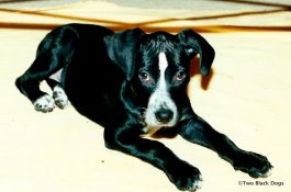 Our baby girl, April 2001