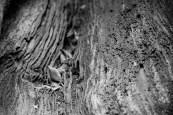 botanic_twoblue-14