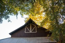 Looking up at peak of barn with barn doors and sun filtering through sycamore leaves over the barn