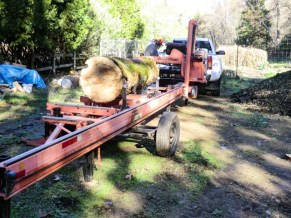 Preparing to mill a large, oak log on a portable band saw