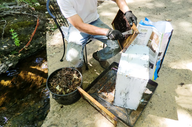 A man is using a metal hive tool to scrape old honeycomb was off of a frame from a beehive