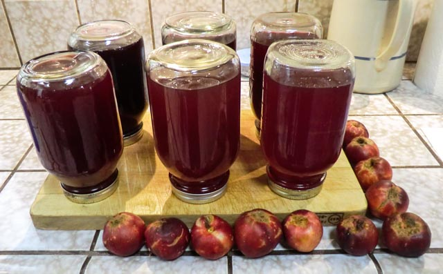 six upside-down jars full of red juice sitting on a cutting board surrounded by nectarines