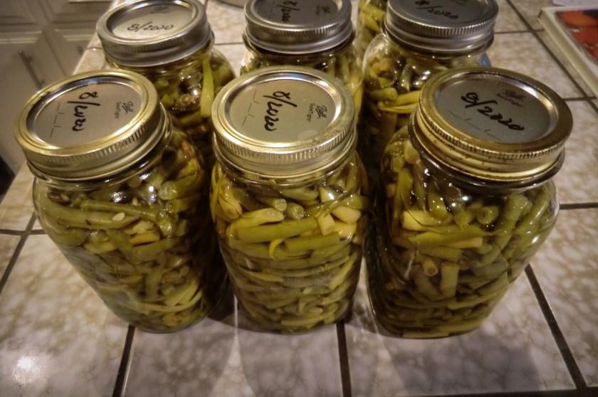 seven mason jars of green beans