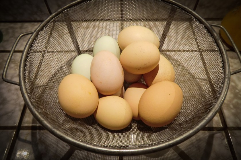 a basket of chicken eggs, various shads of brown and green