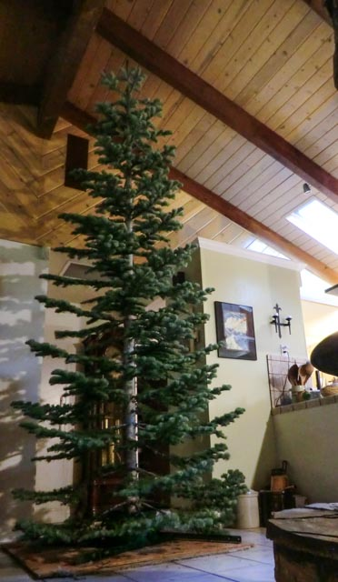 A fresh, undecorated Christmas Tree in a house