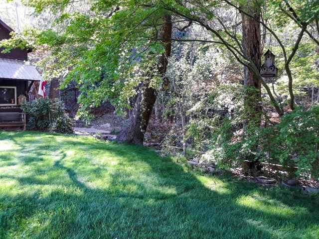a vibrant green yard with dappled sunlight
