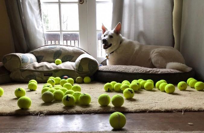 Yuki with his 60 new tennis balls