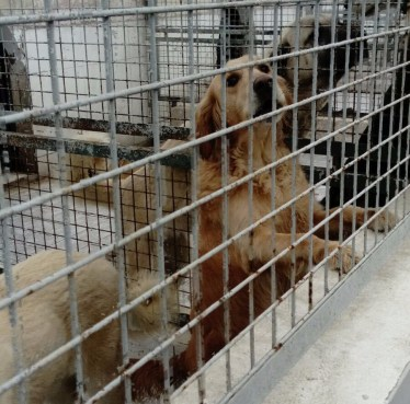 Photo of Dandy dog caged in dog shelter