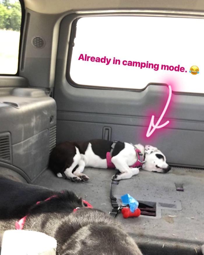 Naya sleeping in back of Tahoe en route to Rock Cut State Park