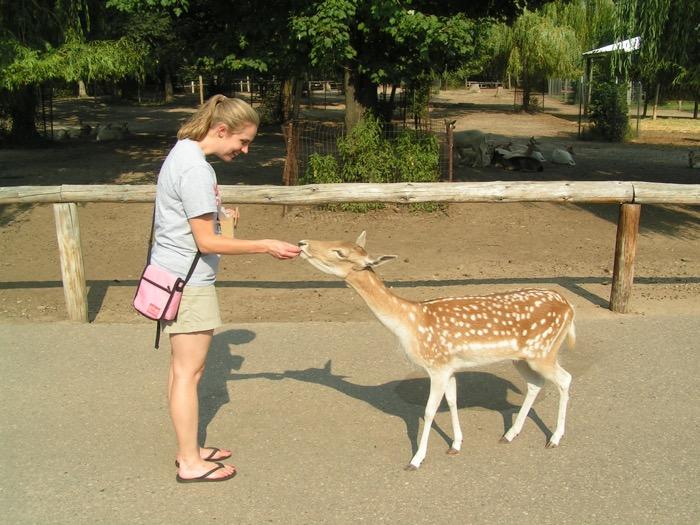 Feeding deer at Wisconsin Dells Deer Park