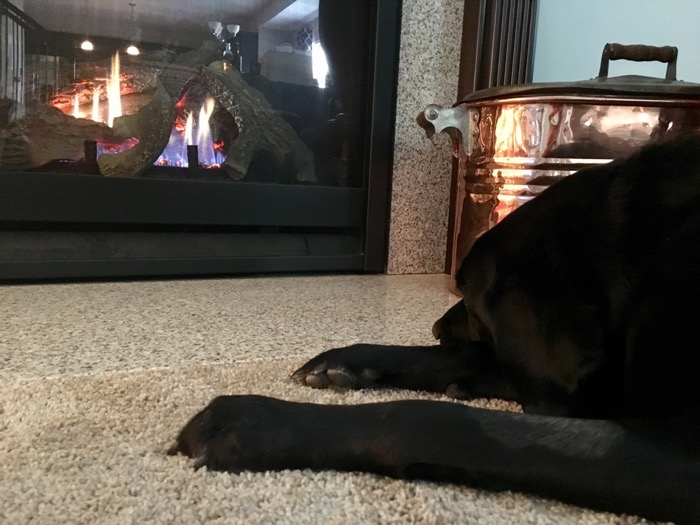 Bailey relaxes in front of the fireplace
