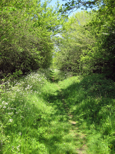 cowpasture_lane_on_a_sunny_spring_day_-_geograph-org-uk_-_793398