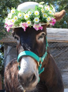 donkey in hat 2