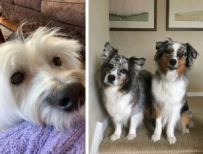 Cheep Trills - Fluff Dogs