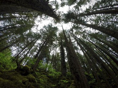 Forest for the Trees. Inside Passage Near Juneau, AK