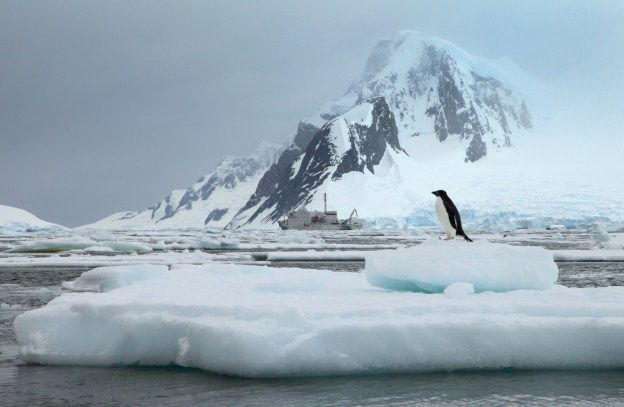 An Adelie penguin, with the Ioffe in the distance