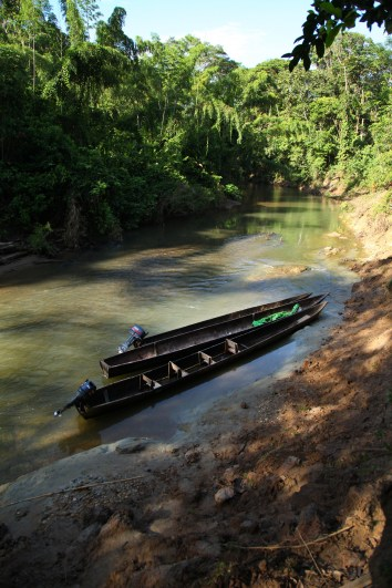A couple of dugout Huaroani canoes tied up on the Shiripuno in front of the Huaorani Ecolodge.