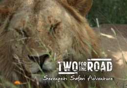 VIDEO: Our Incredible Day on Safari in the Legendary Serengeti