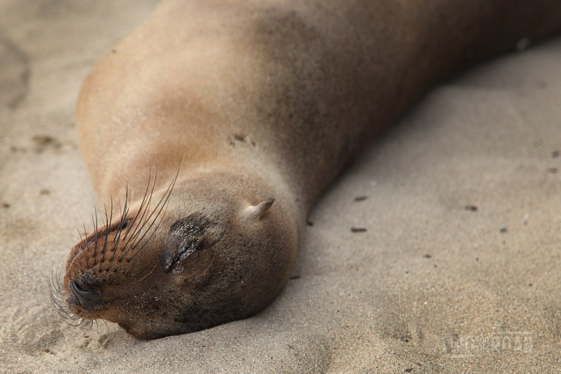 Two for the Road Photo of the Day: Happy Galapagos Sea Lion