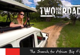 Watch the Promo! Episode 105: Searching for Africa's Big Five
