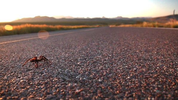 Y'all see that shot of Dusty laying in the road to film a tarantula? There you go!
