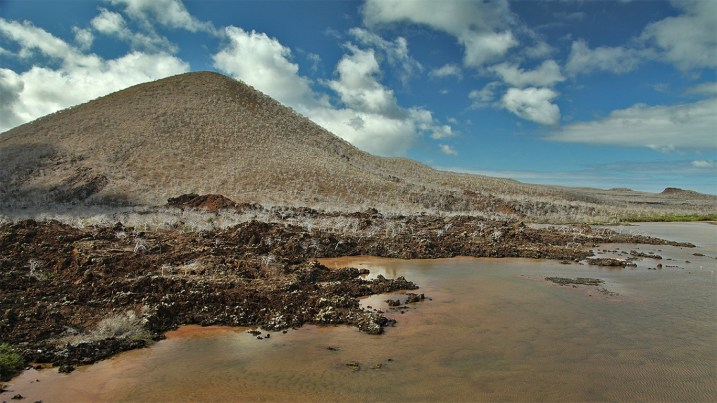 The otherworldly volcanic landscape of Floreana Island. Notice how all the trees look dead? They're actually just dormant because the rainy season hasn't begun yet.