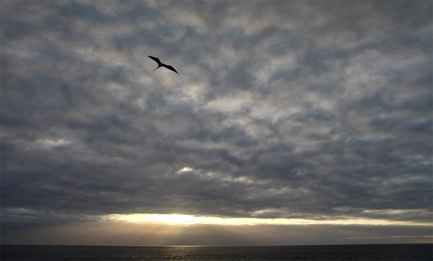 A frigate bird flies high above the Sea Star Journey as the sun rises on a new day.