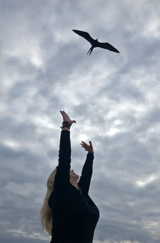 Frigate birds are a common sight in the Galapagos...