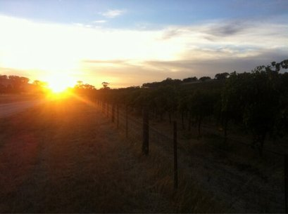 Up early to taste grapes in the vineyard.
