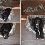 5 Stylish Dog Beds for your New Puppy