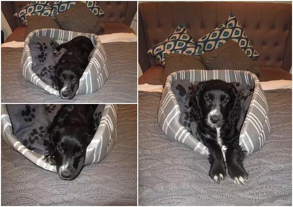 stylish dog bed