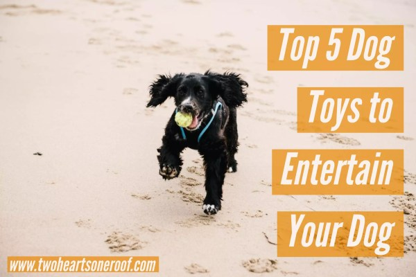 top 5 dog toys