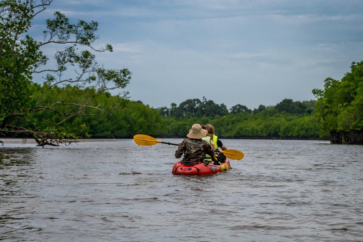 kajak mangroveskov