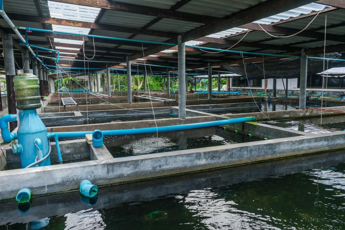 phang nga turtle research area