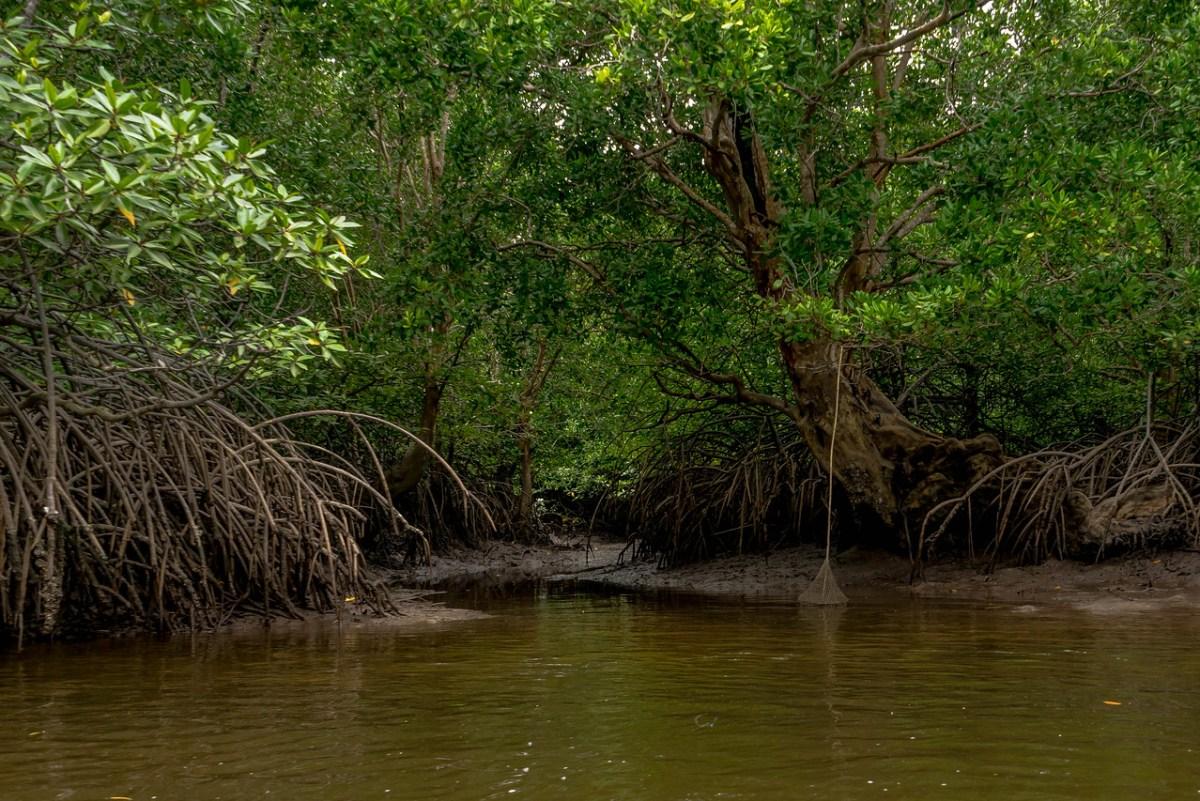 mangrovekanal