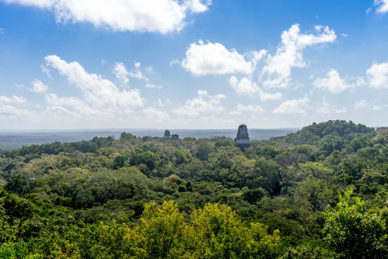 tikal from templo IV