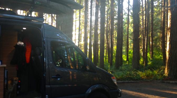 VANdal - Bellingham Washington Forest