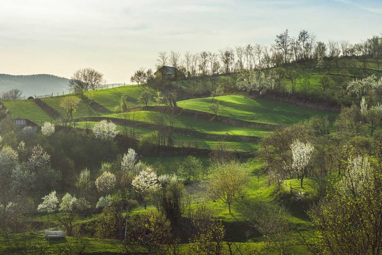 Zielone wzgórza w Rumunii. Transylwania