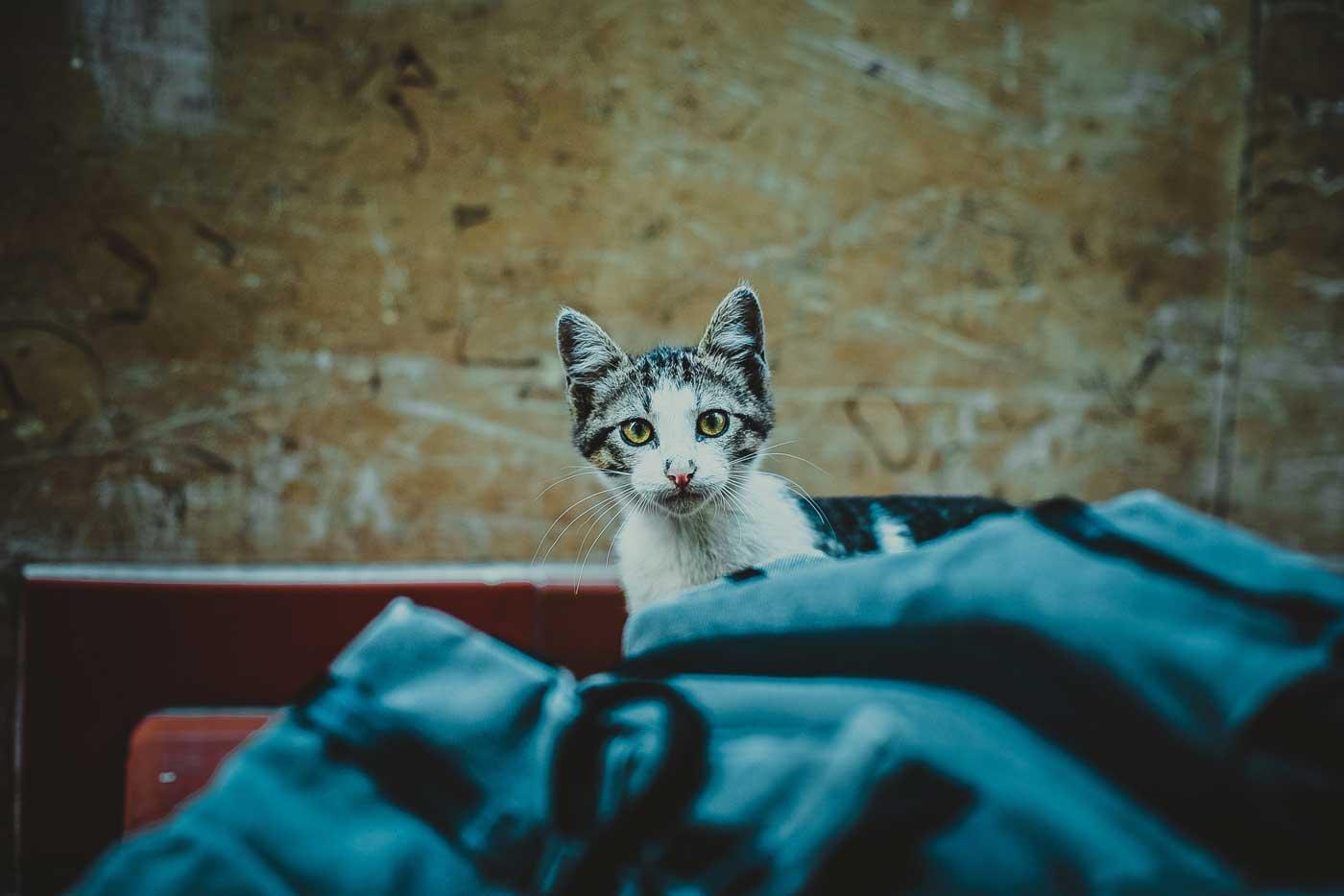 Kot na niebieskiej pościeli