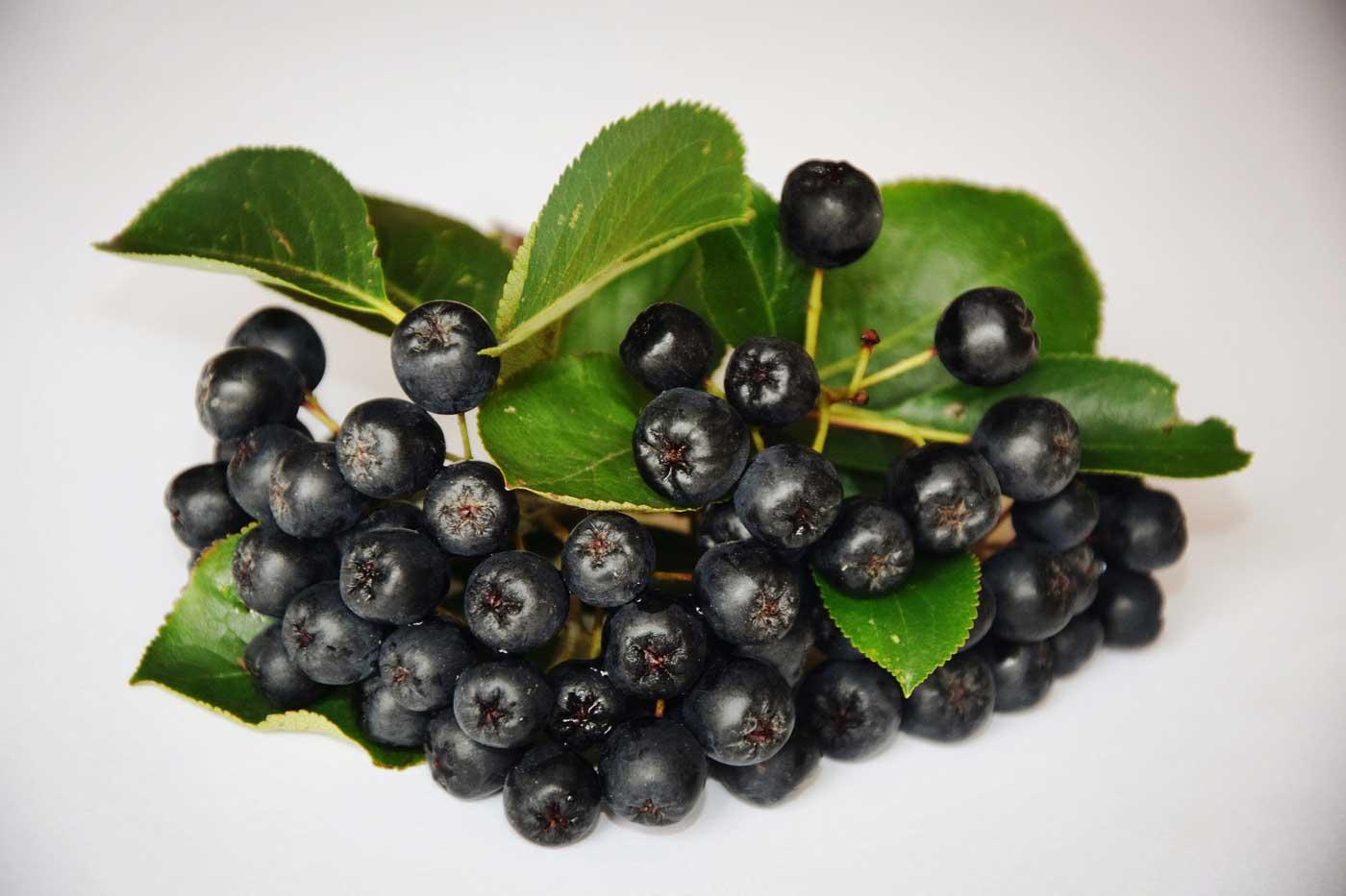 Owoce aronii zalicza się do polskich superfoods.