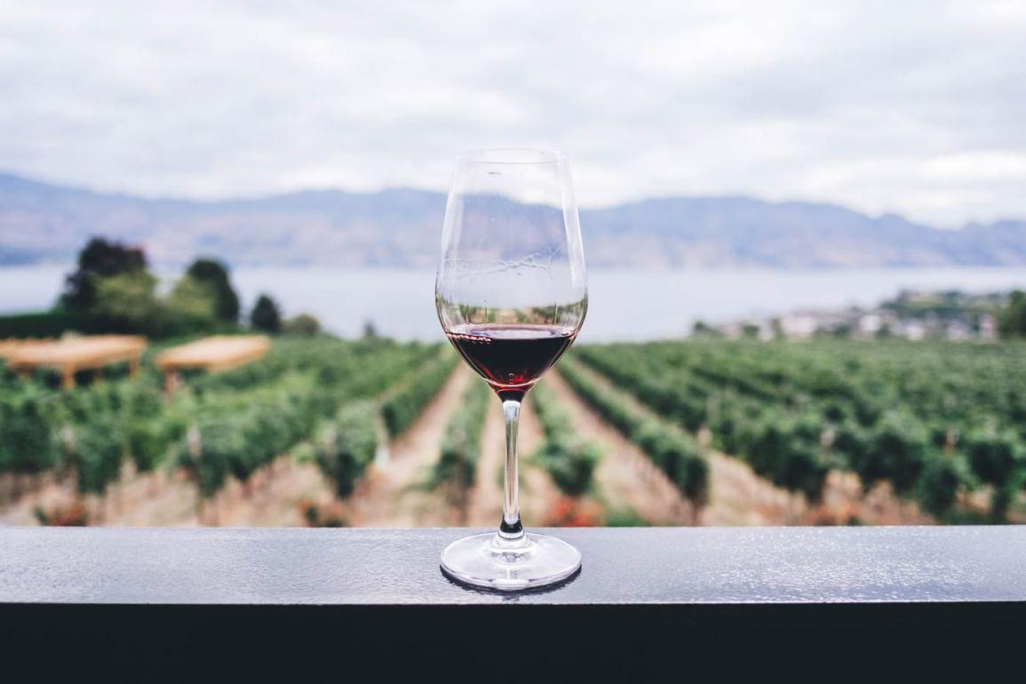Kieliszek wina na tle plantacji winorośli