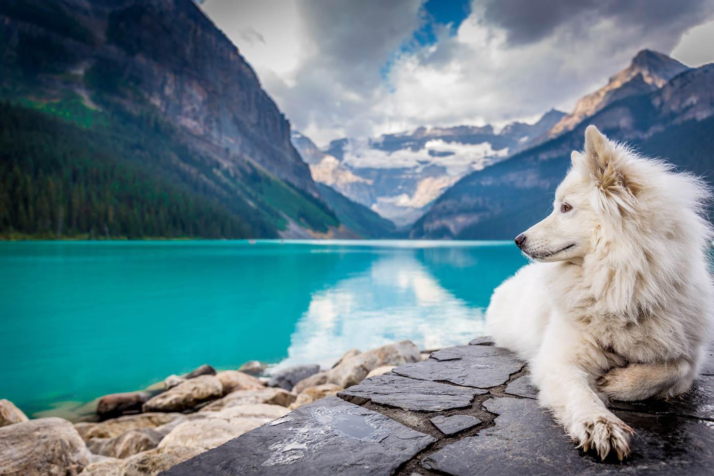 Wakacje z psem w górach