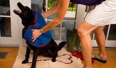 Soggy Doggy Doormat and Shammy