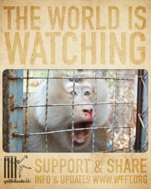 Help Wildlife Friends Foundation Thailand
